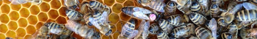 Bienenzuchtverein Villach